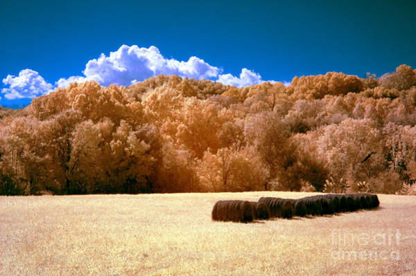 Wall Art - Photograph - Autumn Wheat Field by Paul W Faust -  Impressions of Light