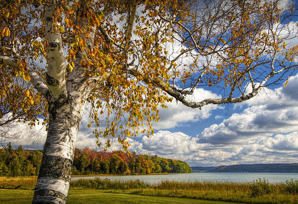 Photograph - Autumn White Birch Tree On The Shore Of Glen Lake by Randall Nyhof