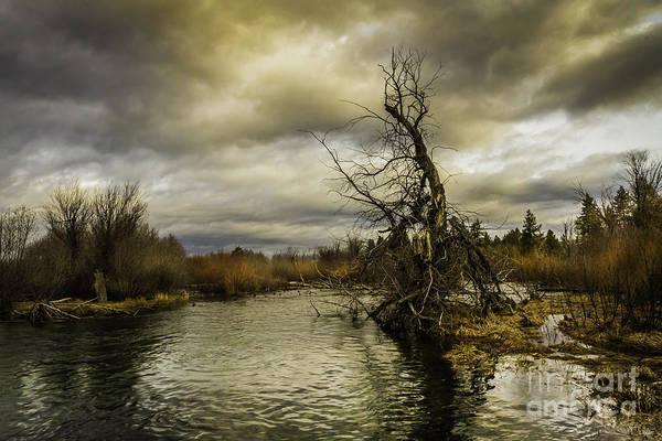 Mitch Shindelbower - Autumn Winds