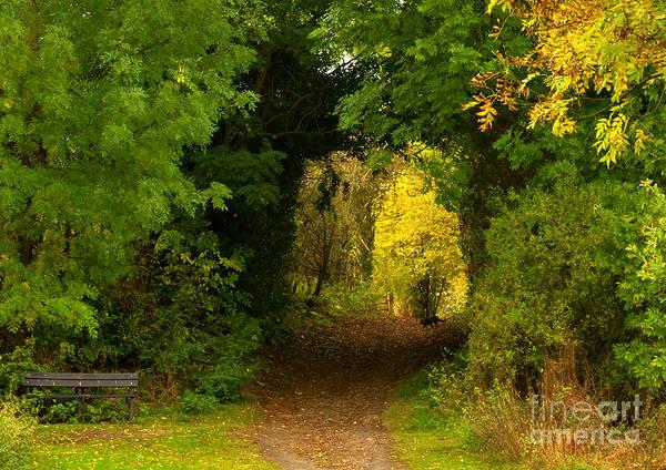 Autumn Woodland Walk Art Print