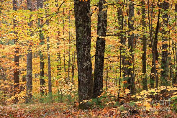 Photograph - Autumn Woods 1 by Michael Mooney