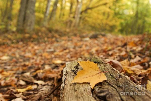 Photograph - Autumn Woods by Karin Pinkham