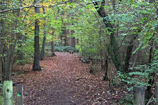 Photograph - Autumn Woods by Tony Murtagh