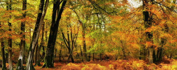 Wall Art - Photograph - Autumnal Forest by Jeremy Walker