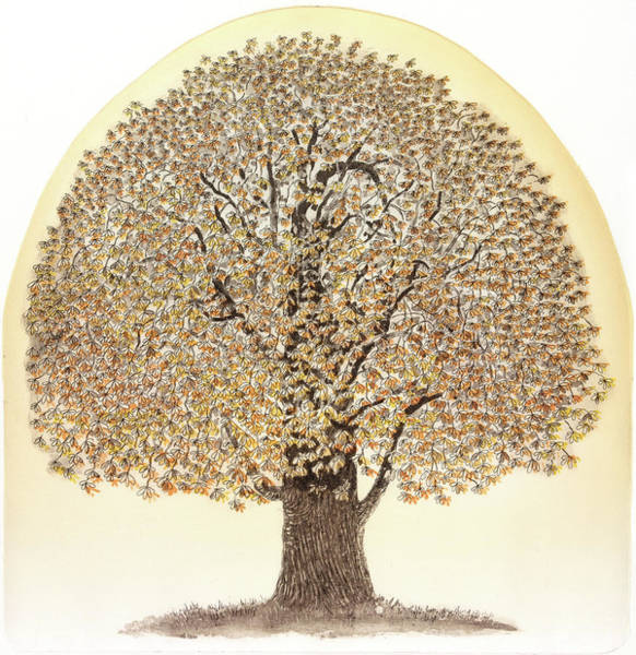 Rust Drawing - Autumnal Glow, 2011, (etching/aquatint/chine Colle) by Jane Peart