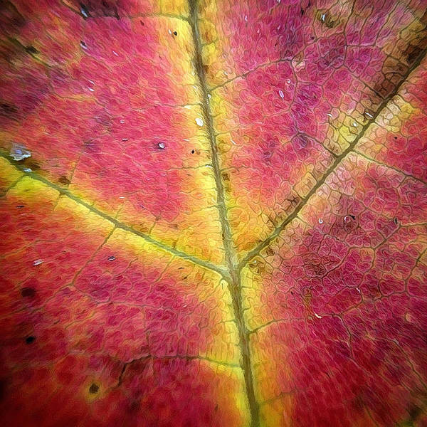 Photograph - Autumnal Intricacy by Natasha Marco