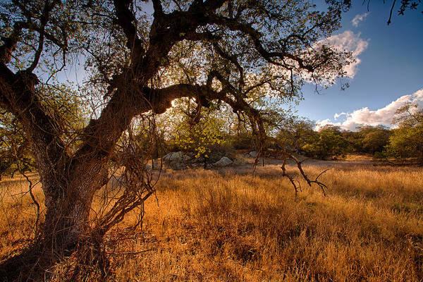 Santa Rosa Photograph - Autumnal Light by Peter Tellone