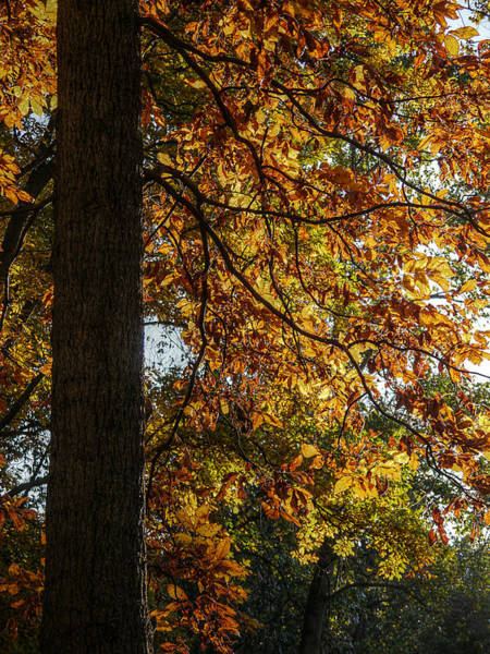 Photograph - Autumnal  by Richard Reeve