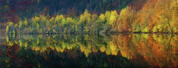 Foliage Photograph - Autumnal Silence by Burger Jochen