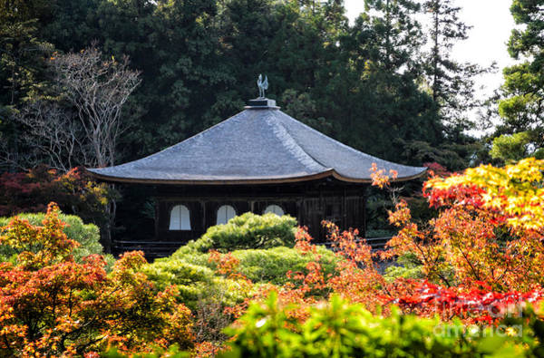 Photograph - Autumnal Temple - Ginkaku-ji - Temple Of The Silver Pavilion In Kyoto Japan by David Hill