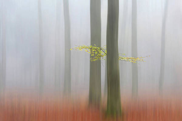 Misty Photograph - Autumnmorning by Huib Limberg