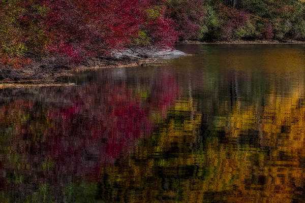 Photograph - Autumns Color Pallette by Susan Candelario