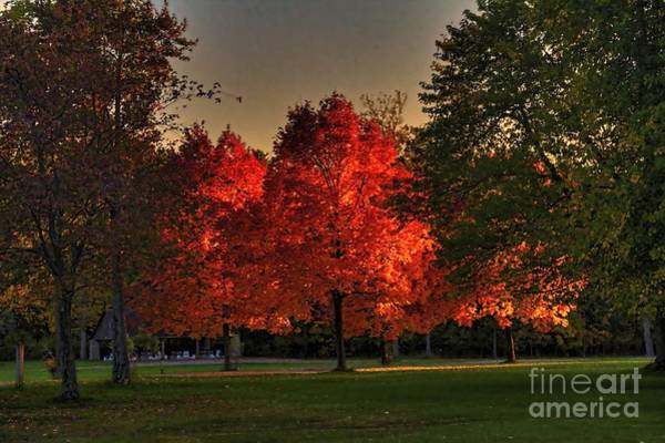 Photograph - Autumns Fiery Maples by Jim Lepard