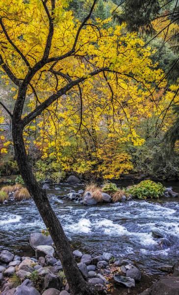 Photograph - Autumn's Grace by Loree Johnson