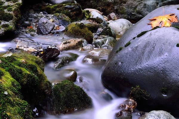 Ivanhoe Photograph - Autumns Love by Todd Sarah Ivanhoe