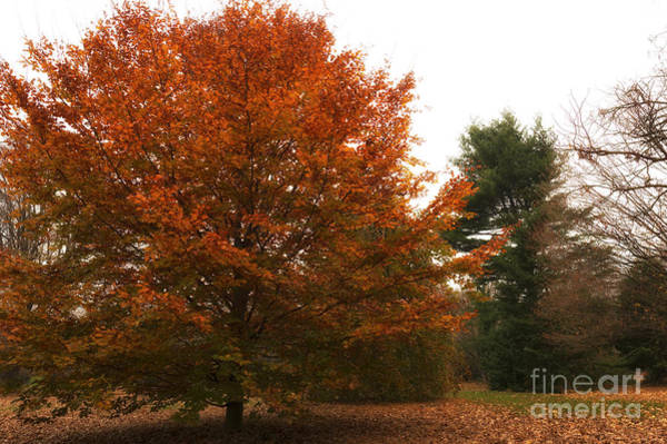 Photograph - Autumn's Orange by John Rizzuto