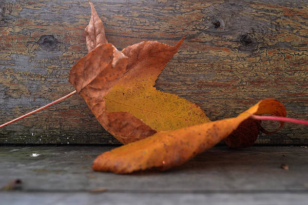 Photograph - Autumns Promise by Melanie Moraga