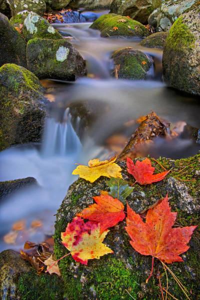 Photograph - Autumn's Song by Darylann Leonard Photography