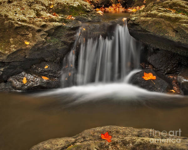 Photograph - Autumns Stream by Susan Candelario