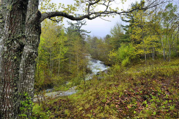 Wall Art - Photograph - Acadia Spring by Stephen  Vecchiotti