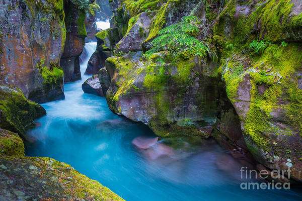 Mossy Photograph - Avalanche Creek Gorge by Inge Johnsson