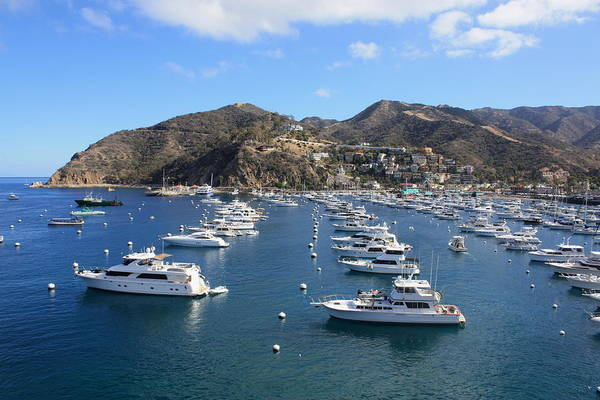 Photograph - Avalon Harbor by Daniel Schubarth