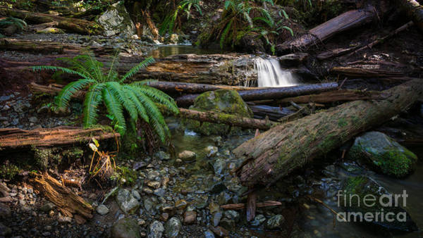Photograph - Avatar Grove Creek Bed by Carrie Cole