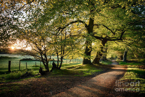 English Countryside Photograph - Avenue Of Light by Tim Gainey