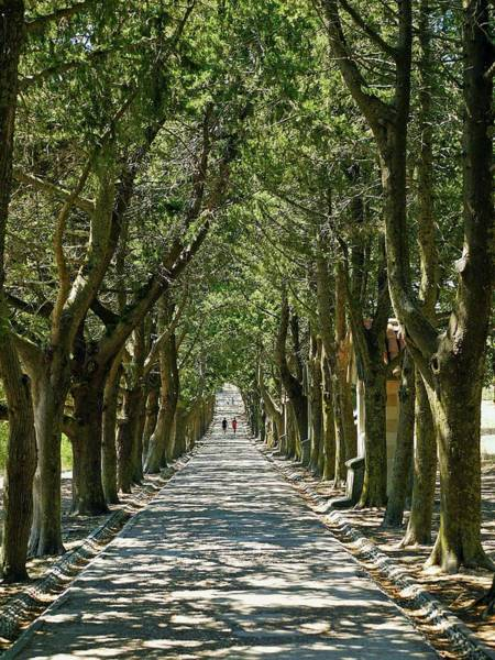 Dodecanese Photograph - Avenue Of Trees Explore by Kennethbarker