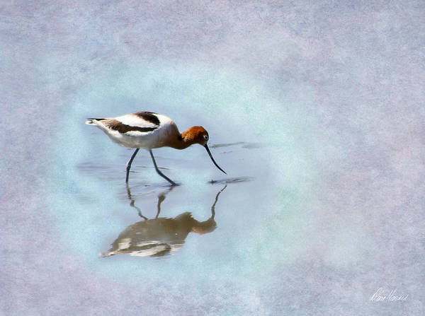 Photograph - Avocet Looking For Dinner by Diana Haronis