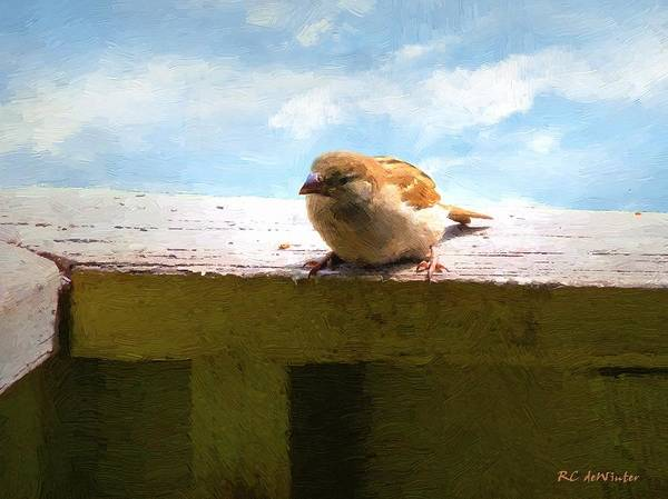 Painting - Aw Shucks by RC DeWinter