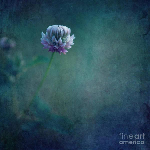 Wall Art - Photograph - Awaken From A Dream by Priska Wettstein