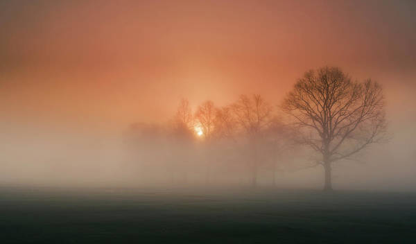 Soft Color Photograph - Awakening by David Dai