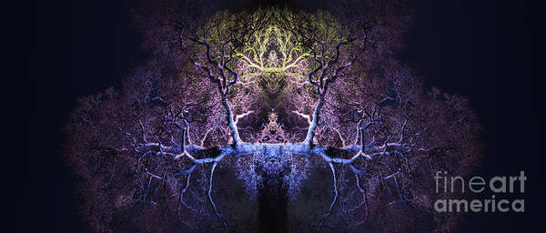 Yggdrasil Photograph - Awakening by Tim Gainey