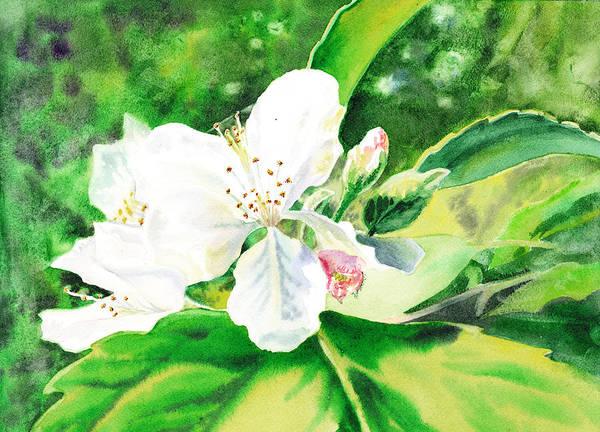 Wall Art - Painting - Awesome Apple Blossoms by Irina Sztukowski