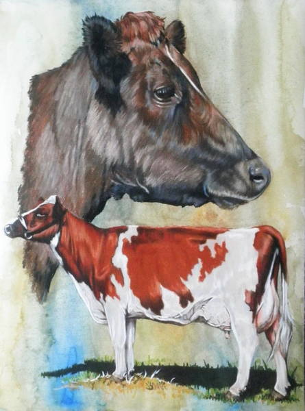 Mixed Media - Ayrshire Cattle by Barbara Keith