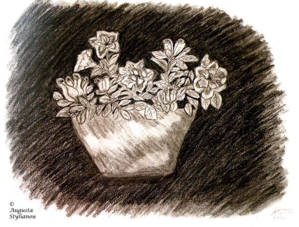 Drawing - Azalea Flower  by Augusta Stylianou