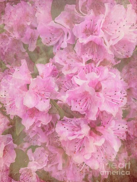 Azalia Photograph - Azalea Textured by Arlene Carmel