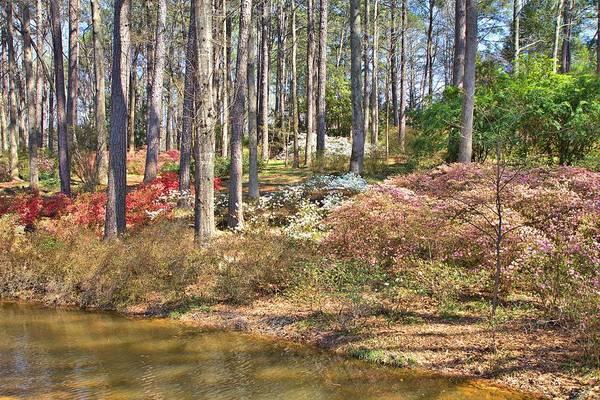 Photograph - Azaleas By The Pond's Edge by Gordon Elwell