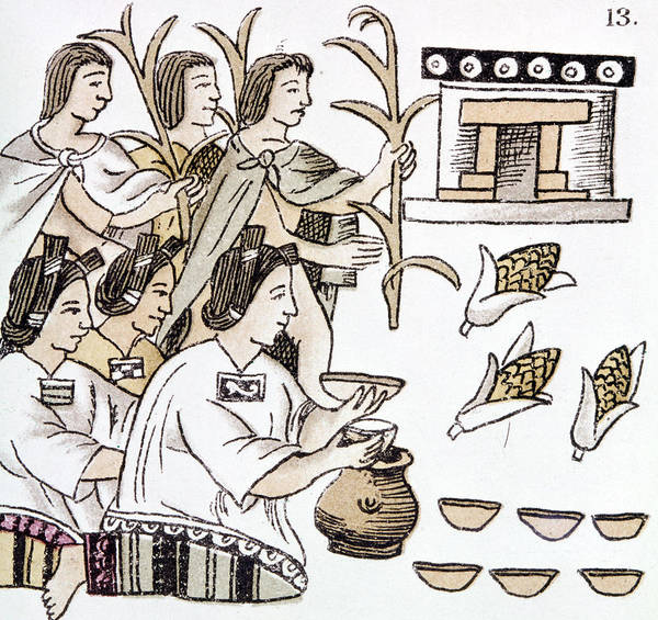 Indian Corn Drawing - Aztec Harvest Ceremony by Granger