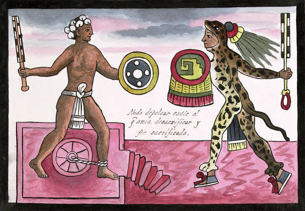 Aztec Photograph - Aztec Sacrificial Fight by Library Of Congress