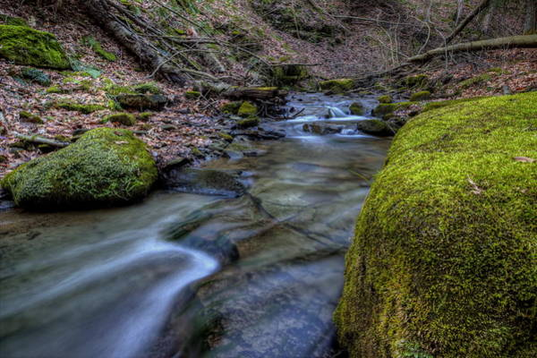 Photograph - Babbling Brook by David Dufresne
