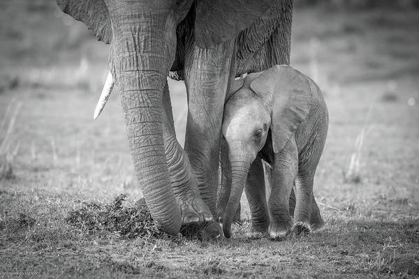 Amboseli Wall Art - Photograph - Baby 1 by Jeffrey C. Sink