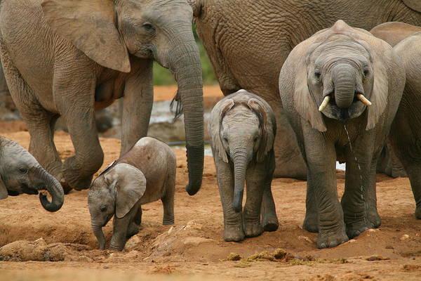Wall Art - Photograph - Baby African Elephants by Bruce J Robinson