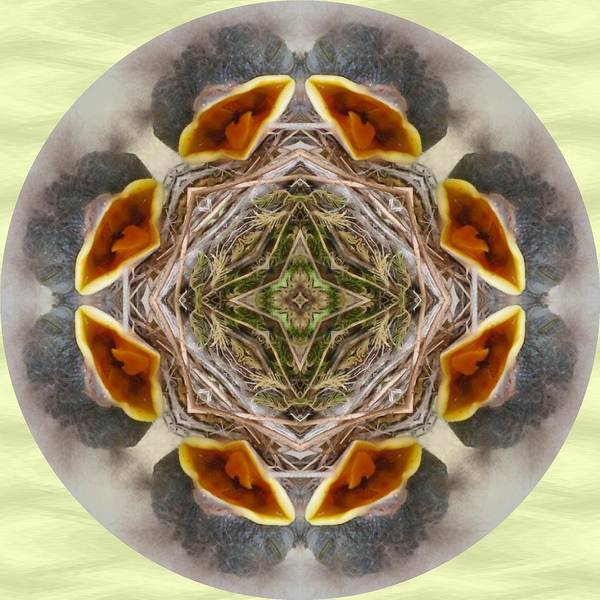 Photograph - Baby Bird Kaleidoscope by Natalie Rotman Cote