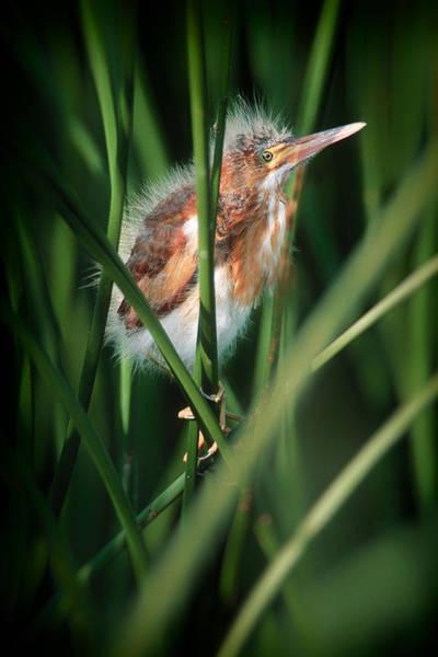 Photograph - Baby Bird by Patrick M Lynch