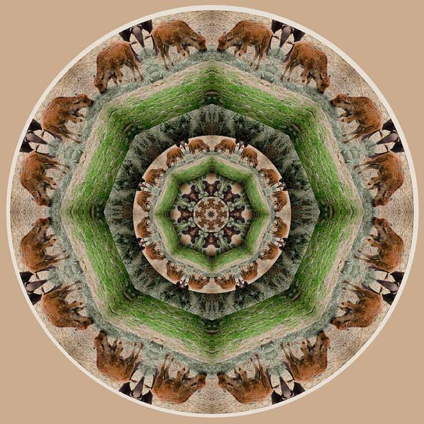 Digital Art - Baby Bison Mandala by Beth Sawickie
