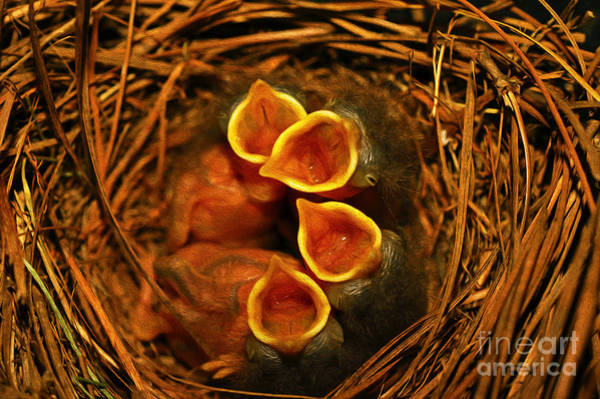 Hungry Photograph - Baby Bluebirds by Laura D Young