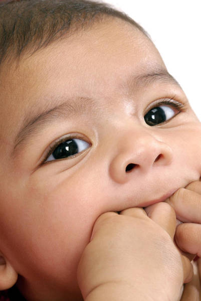 Chewing Wall Art - Photograph - Baby Boy by Lea Paterson/science Photo Library