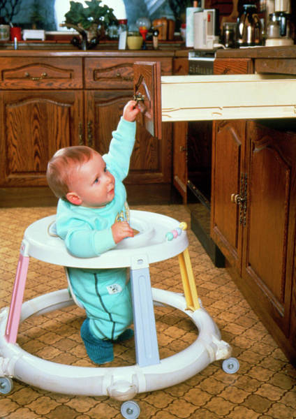 Walkers Photograph - Baby Danger by Jim Selby/science Photo Library